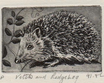 Vetch and Hedgehog, original etching by Moira McTague