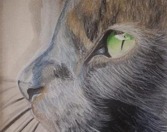 Colored Pencil Cat