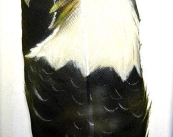 Screaming Bald Eagle - Russ Abbott Original Hand Painted Feather