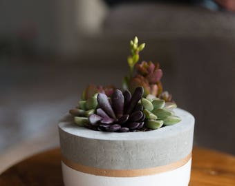 Mother's Day Gift for Her, Medium Concrete Planter, White & Gold