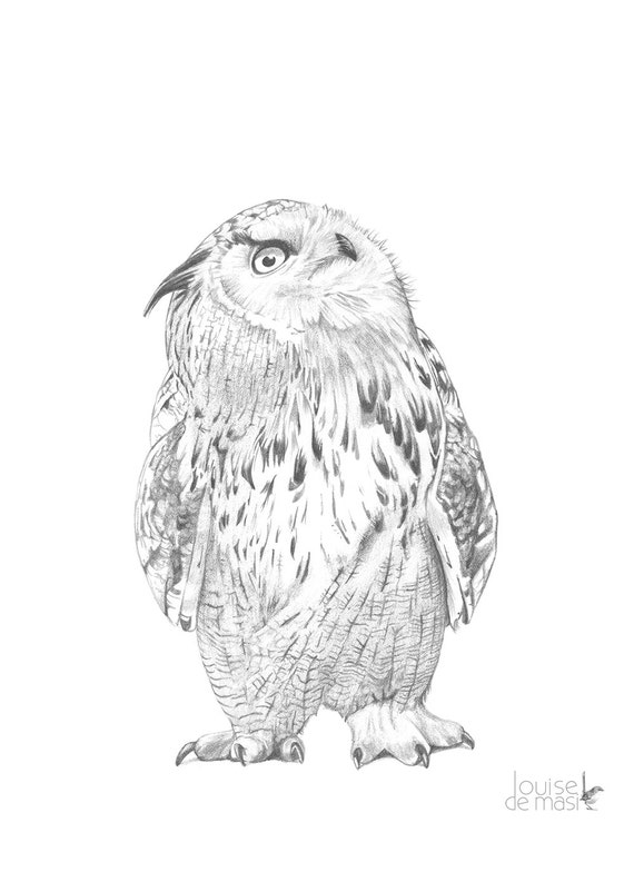 Owl illustration print, Owl pencil drawing, owl graphite drawing Print, owl drawing, Eagle Owl print, eagle Owl drawing 5 by 7 size, OD7416