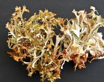 Real lichen, grey big lichen, Dried lichen, for floral decor, terrariums, miniature gardens, fairy gardens, floral supplies, craft supplies