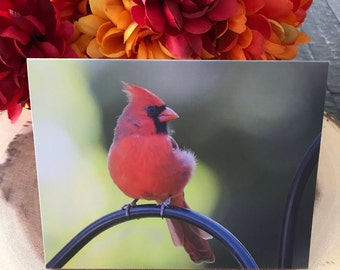 Northern Cardinal, Blank Greeting Card Set/Note Card Set-8 Cards