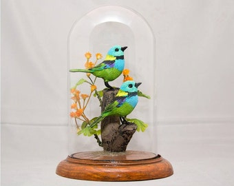 Green Tanager (Brazil)in 8 inch dome with base.