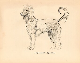 "1938 Vintage DOG PRINT from a book of Sketches by K.F. Barker ""Afghan Hound"""
