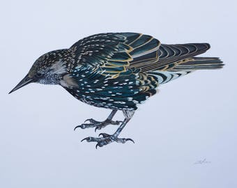 """The Starling- Giclee Print 8"""" x 10"""""""