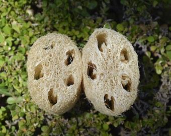Natural Luffa (Loofah)