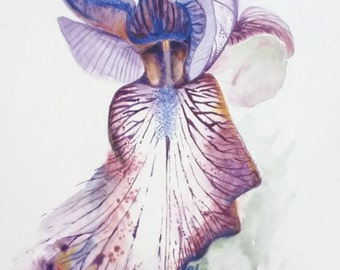 "Iris flower Original 11""x15"" watercolour ""Tiger"""