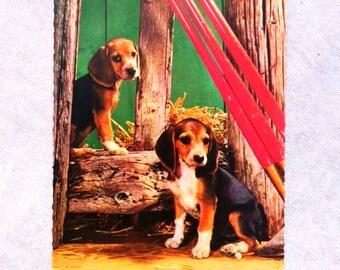 Vintage Beagle Postcard Vintage Dog Postcard Antique Beagle Postcard Collectible Postcard
