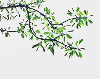 Botanical Bliss Series - Fine Art Photography