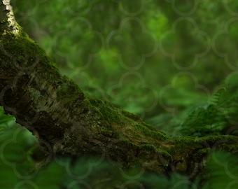 Magic Forest Fern Digital backdrop