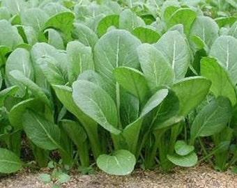 Spinach Seeds Mustard Tendergreen, A Garden Favorite, Heirloom, 25 Seeds