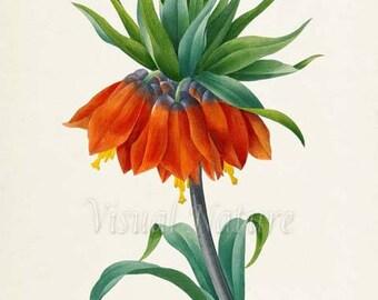 Crown imperial fritillary Flower Art Print, Botanical Art Print, Wall Art, Flower Print,Floral, Redoute,orange,green, Fritillaria imperialis
