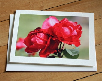 Red Roses Greeting Card, Blank Greeting Card, Note Card, Any Occasion, Birthday Card, Envelope, Photography, Photograph, Flowers, Floral