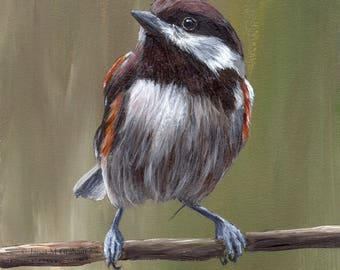 Bird Art Painting Chestnut Backed Chickadee SFA Wildlife Original hand painted bird acrylic painting by Australian Artist Janet M Graham