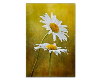 Daisies Leaning Toward the Sun, Photograph of Daisy Flowers Wall Art White, Yellow and orange Tones Fine art Photo decor floral nature print