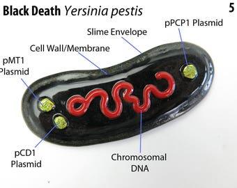 Yersinia pestis Plague  Bacteria  Fused Glass Ornament Suncatcher