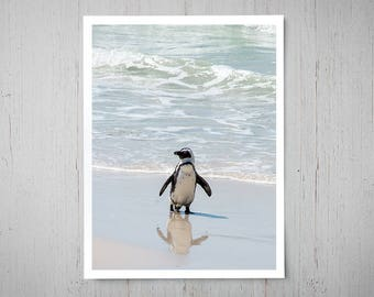 Beach Penguin - Animal Photography, Archival Giclee Print, Bird Wildlife Photo - Multiple Sizes Available