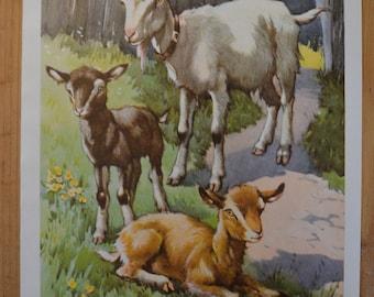 1950s Goat Illustration - Farmyard Friends