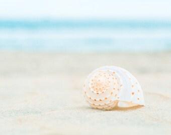 Beach Photography, Seashell Print, Shell, Aqua, Blue, Beige, White, Seashore, Ocean Wall Art, Sea, Coastal Art Print, Beach House Decor
