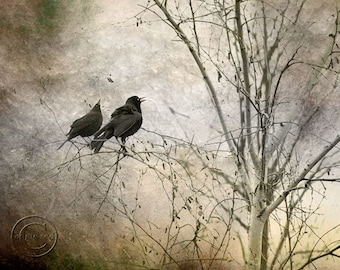 Blackbird Print, Pair of Blackbirds, Surreal, 2 Blackbirds, Two Black Birds, Mysterious Blackbird Print, Fine Art Photography