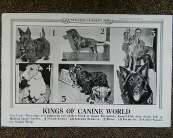 Dog Show, Illustrated Current News, Kings of Canine World, Westminster Kennel Club, Best of Breed, February 1941, Very Good Condition