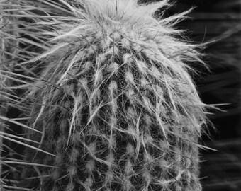 Cactus Needles, Photo Art, Black and White, Botanical Print, Wall Art, Cactus Macro, Photo Print, Southwest Decor, Home Decor, Art
