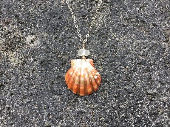 Hawaiian Sunrise Shell, Salmon Pink, Surf Tumbled Seaglass, 14k Gold Filled Chain Necklace