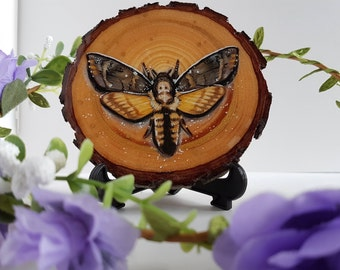 Skull Moth - Original Wood Slice Art