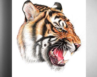 Tiger - Illustrated Giclee Print