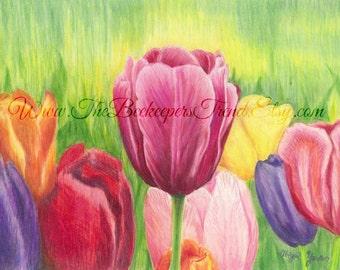 Colored Pencil Tulips (8x10)