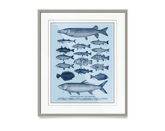 "Fish Decor- Fish Wall Decor- Nautical Decor- Representative Types of Fish Print- 30"" x 24"" Coastal Decor Beach Decor"