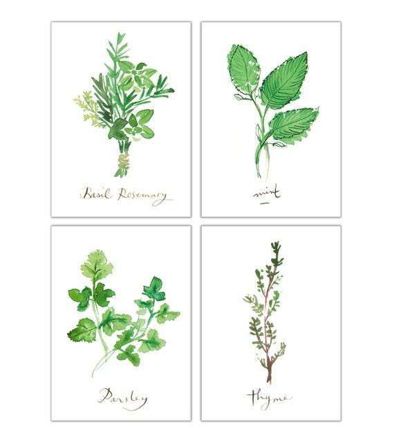 Quatre aquarelles herbes aromatiques d coration cuisine art - Herbes aromatiques cuisine liste ...
