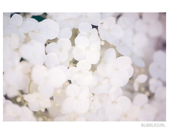 Nature Photography PRINT, Hydrangea in White, Wall Art