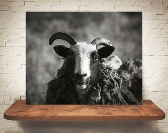 Horned Goat Photograph - Black White Photo - Fine Art Print - Wall Decor - Animal Pictures - Wall Art - Farmhouse Decor - Gifts