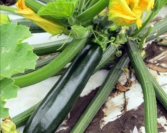 Dark Green Zucchini Summer Squash Heirloom Seeds - Non-GMO, Open Pollinated, Untreated