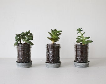 Mason Jar Planters with drainage - set of 3 - UpCycled Jelly Jars and Vintage Zinc Lids Saucer Plates - BootsNGus Home and Garden Glass Pots
