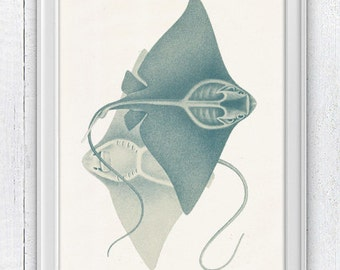Couple of stingrays - Home decor print  , wall art sea life print- Coastal home wall art SAS044