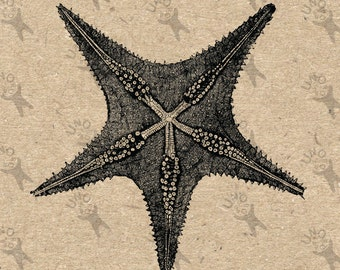 Vintage retro drawing image Ocean Life Starfish Instant Download black and white clipart digital printable graphic   HQ 300dpi