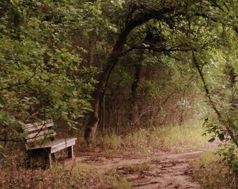 8x10 Resting Place, Bench in the Woods, Mossy Woodland, Texas Landscape, Dreamy Landscape, Bending Tree