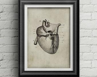 Anatomía 009 - poster de corazón - antiguo impresión del corazón - anatomía antigua de ilustración - deco de cartel medicina - corazón