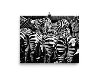 Zebra Stripes Everywhere! Print Photo paper poster