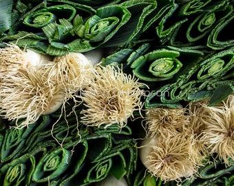 Leeks - Fine Art Print - Photograph - Wall Art - Kitchen Decor - Food Photography - Green