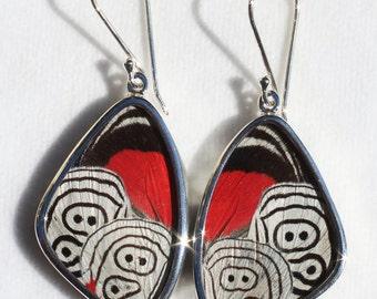 Medium Cramers 88 Butterfly Wing Silver Dangle Earrings