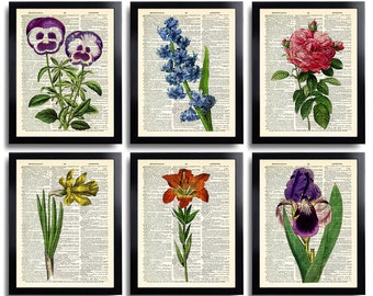 Botanical Gift Set of 6 Prints Flowers art Flower Art Print Flower Posters Wall Decor Floral Home Decor Wall Art Gift set for Girlfriend 594