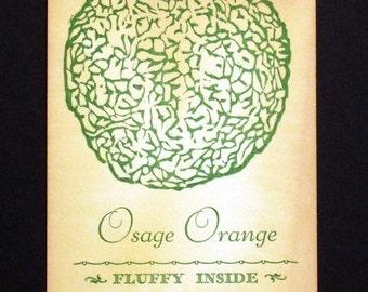 Osage Orange Postcard