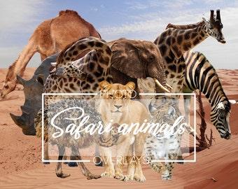 20 Safari animals overlays, PNG overlays
