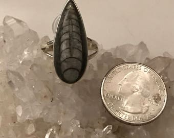 Orthoceras Fossil  Ring Size 11