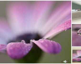 Photography lilac flower with drop of water
