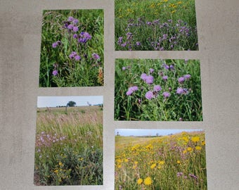 Prairie Mix Grouping of Photographs